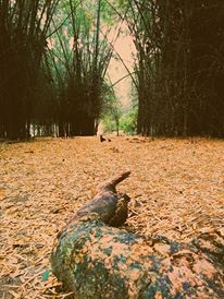 Madumalai forests, Casa Deep Woods
