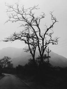 The Ghosts of Nilgiris